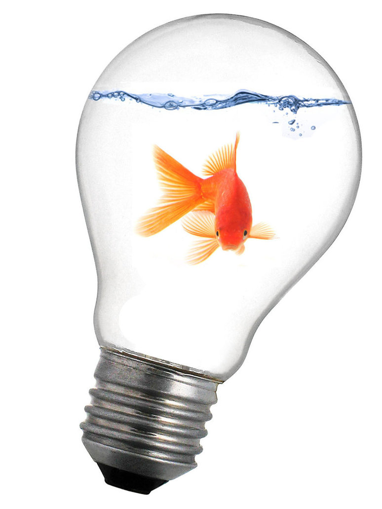 Goldfish in a light bulb